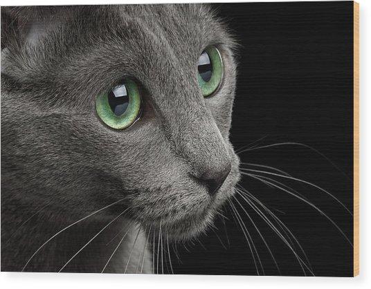 Closeup Russian Blue Wood Print