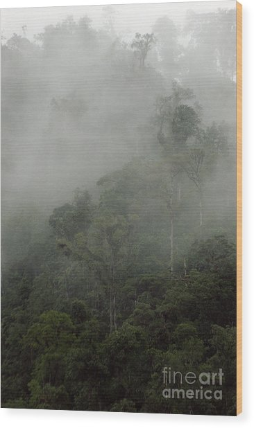 Cloud Forest Wood Print