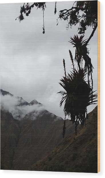 Cloud Forest Musings Wood Print