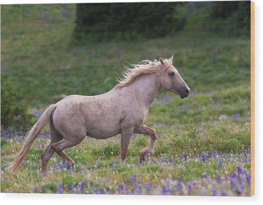 Cloud- Wild Stallion Of The West Wood Print