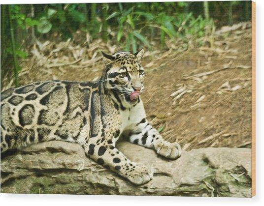 Clouded Leopard 1 Wood Print