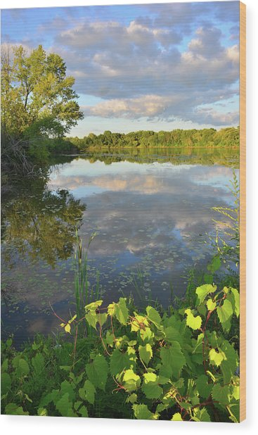Clouds Mirrored In Snug Harbor Wood Print