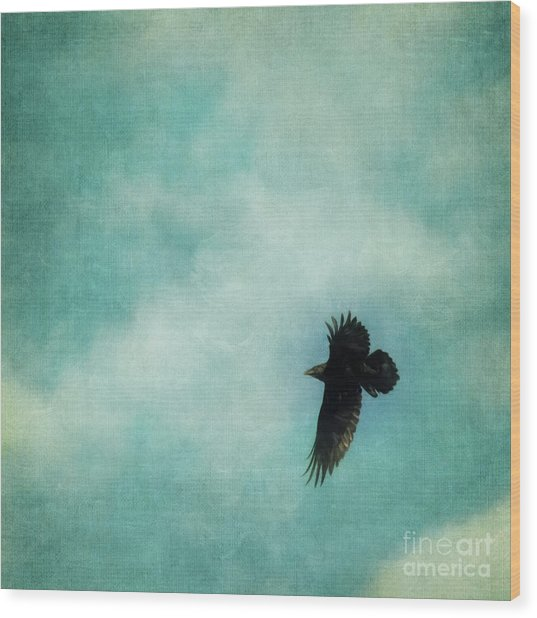 Cloudy Spring Sky With A Soaring Raven  Wood Print