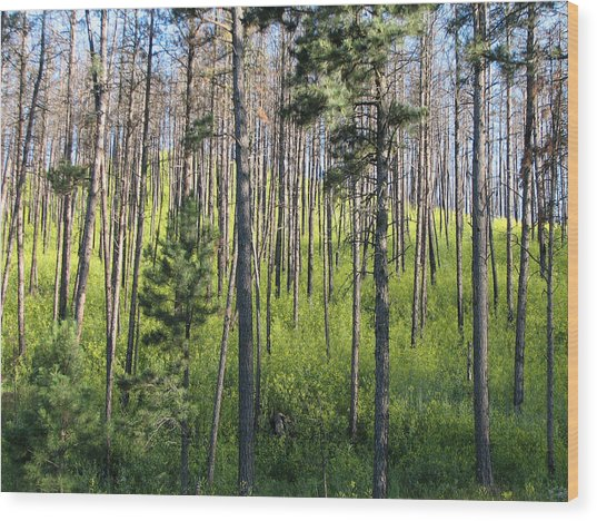 Clover In Pines Wood Print by Marion Muhm