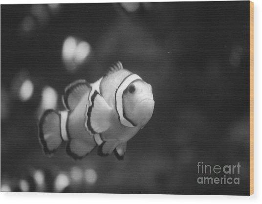 Clownfish Wood Print by Brenton Woodruff