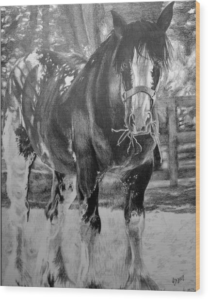 Clydesdale Wood Print by Darcie Duranceau