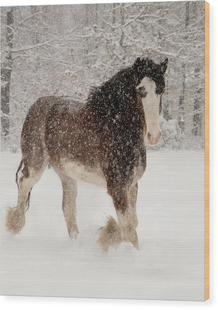 Clydesdale In The Snow Wood Print