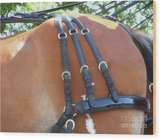 Clydesdale Tack Wood Print