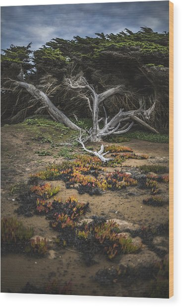 Coastal Guardian Wood Print