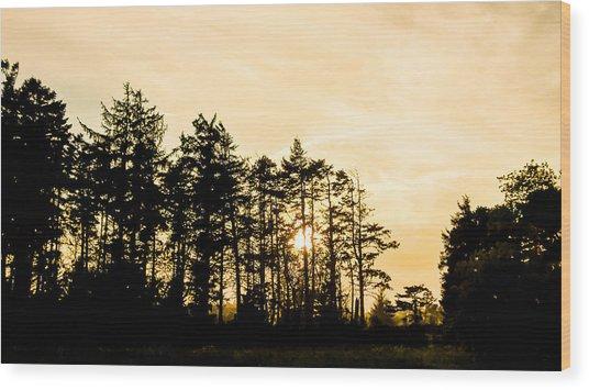 Coastal Trees Wood Print