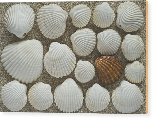 Cockles Collection Wood Print by Igor Voljch