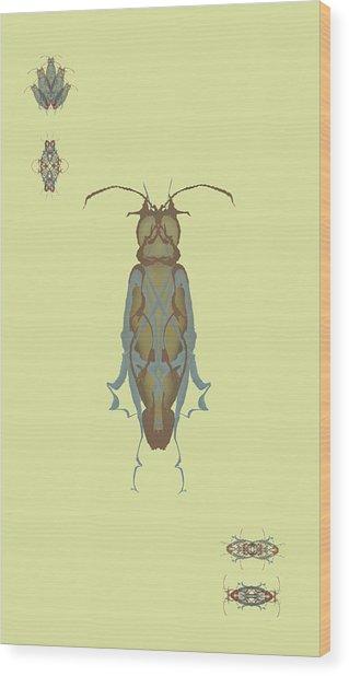 Cockroach Specimen Wood Print