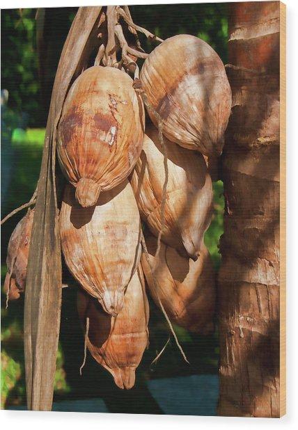 Coconut 3 Wood Print