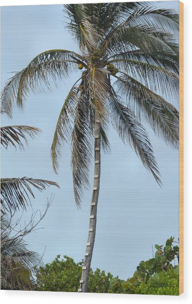 Coconut Collecting Wood Print by JAMART Photography