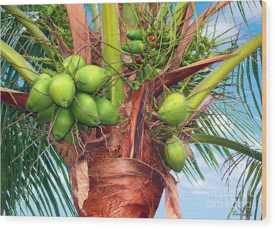 Coconut Palm Treasure Coast Florida C1 Wood Print
