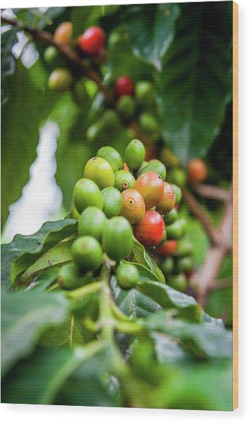 Coffee Plant Wood Print