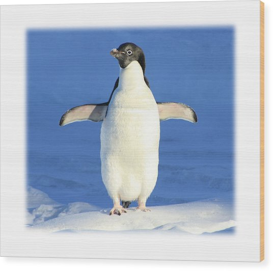 Cold Feet - Penquin In The Snow Wood Print