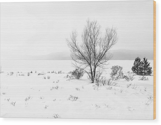 Cold Loneliness Wood Print