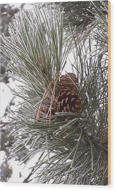 Cold Pine Wood Print