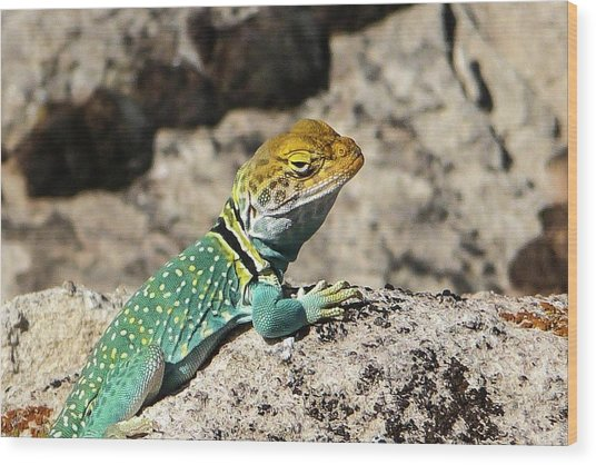 Collared Lizard Wood Print