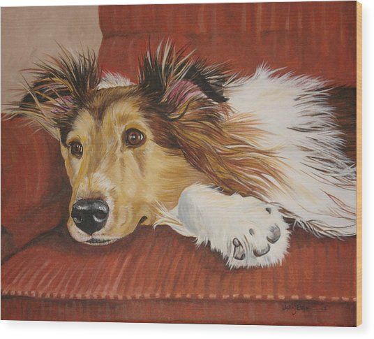 Collie On A Couch Wood Print by Laura Bolle