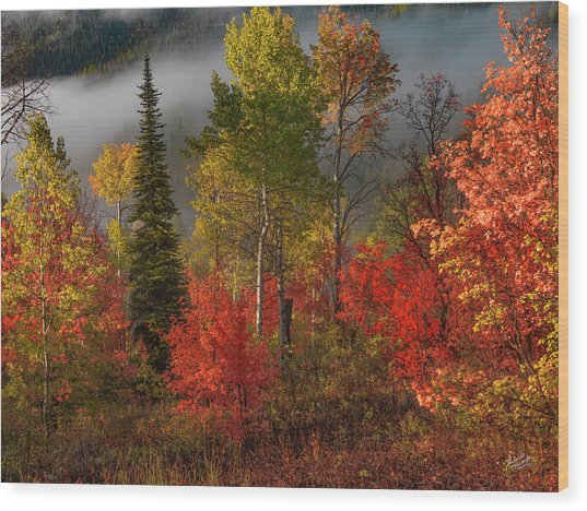 Color And Light Wood Print by Leland D Howard