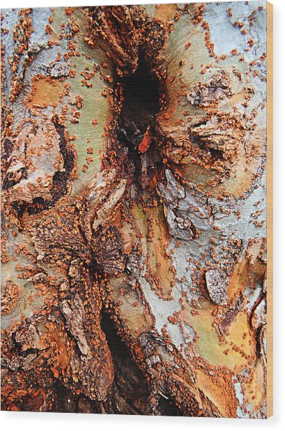 Color And Texture Wood Print by William Jones