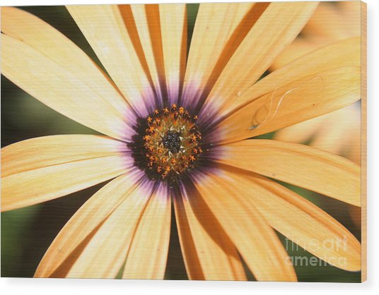 Color Burst Wood Print by Amy Holmes