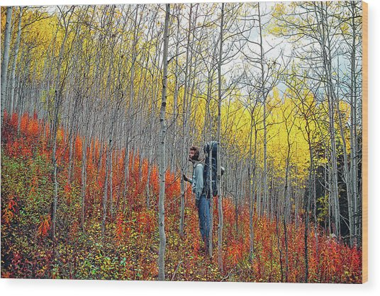 Color Fall Wood Print