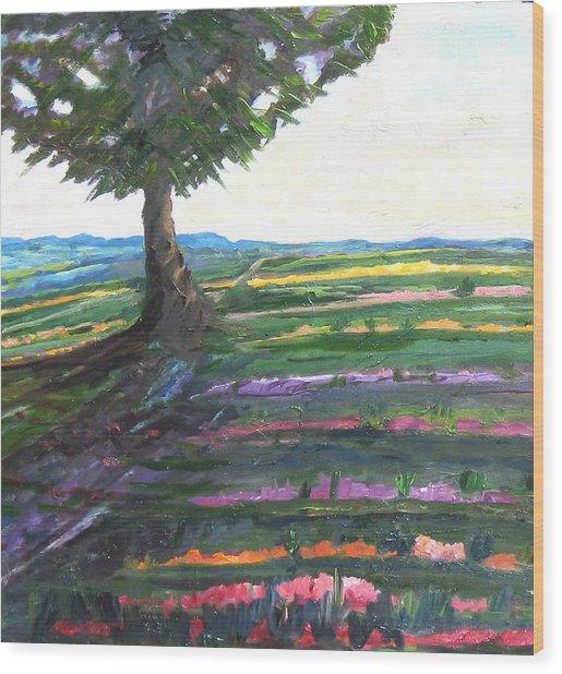 Color Fields Wood Print