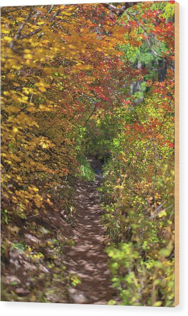 Cascade Mountain Range Color Vortex Wood Print