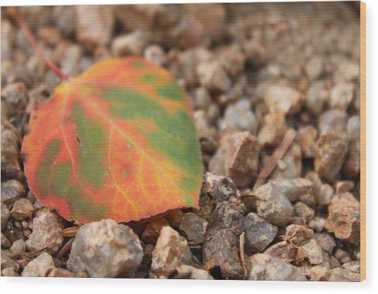 Colorado Fall Colors Wood Print