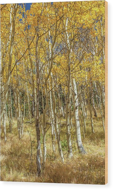Colorado Gold Wood Print