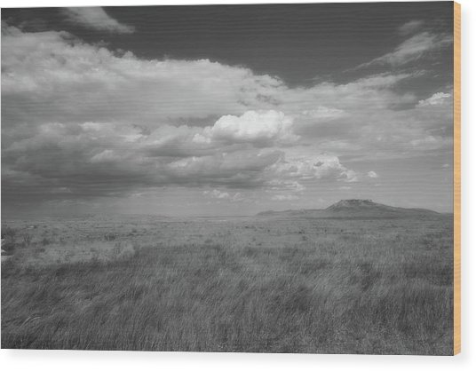 Colorado Grassland Wood Print