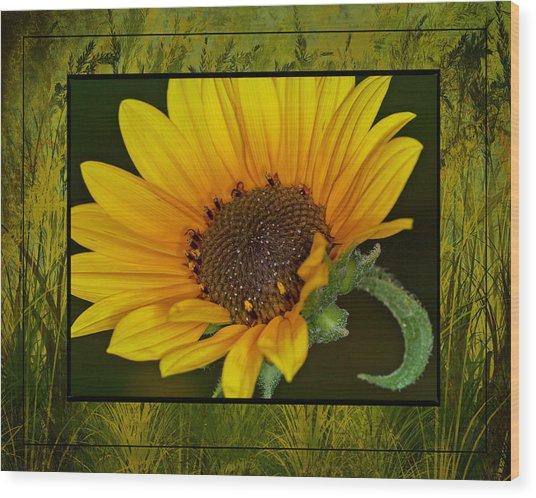 Colorado Sunflower Wood Print