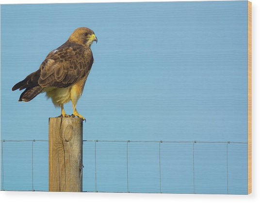 Wood Print featuring the photograph Colorado Swainson's Hawk Perched by John De Bord