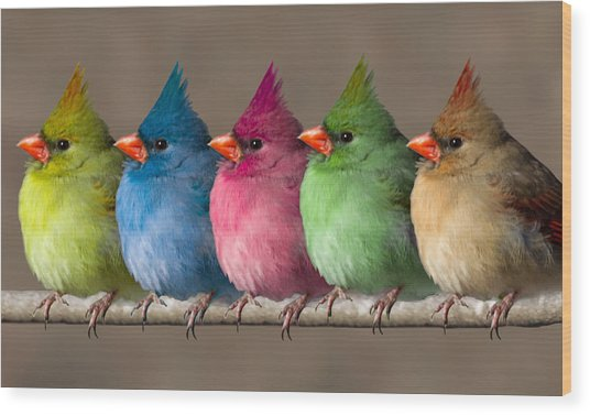 Colored Chicks Wood Print