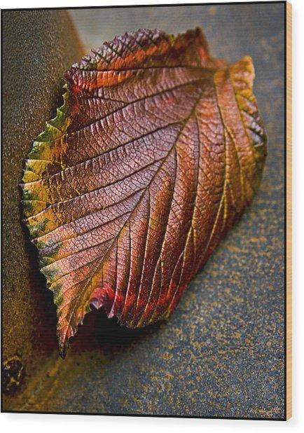 Colorfall Wood Print by Daniel G Walczyk
