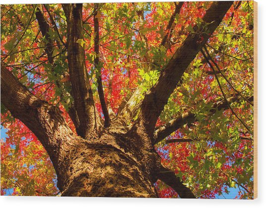 Colorful Autumn Abstract Wood Print