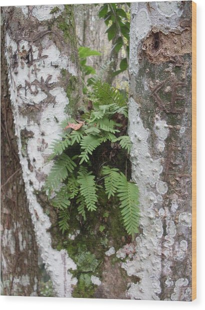 Colorful Bark And Fern Wood Print by Warren Thompson