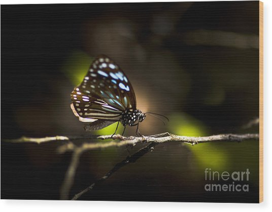 Colorful Butterfly On Twig Wood Print