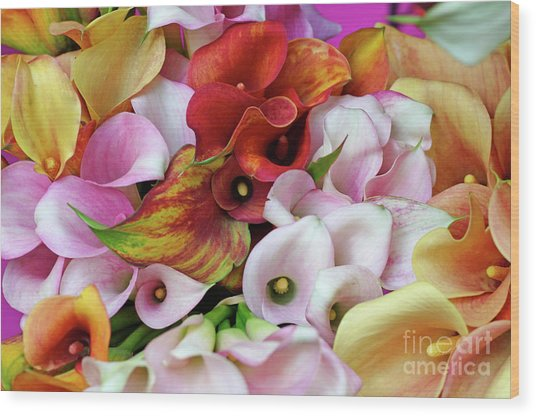 Colorful Calla Lilies Wood Print