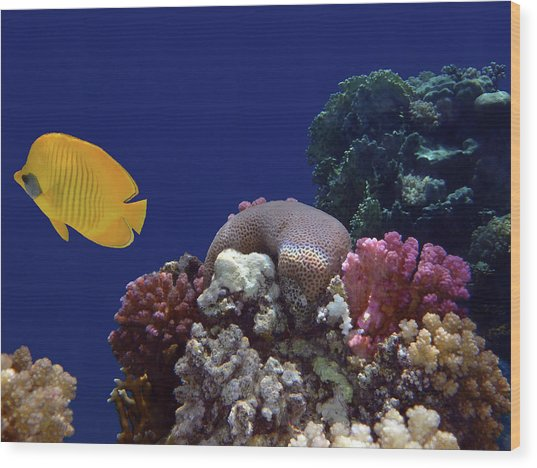 Colorful Coralreef Wood Print