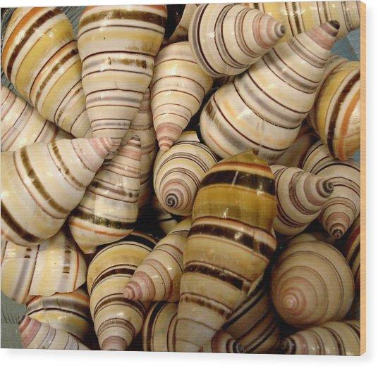 Colorful Cream And Tan Shells Wood Print by Rosalie Scanlon