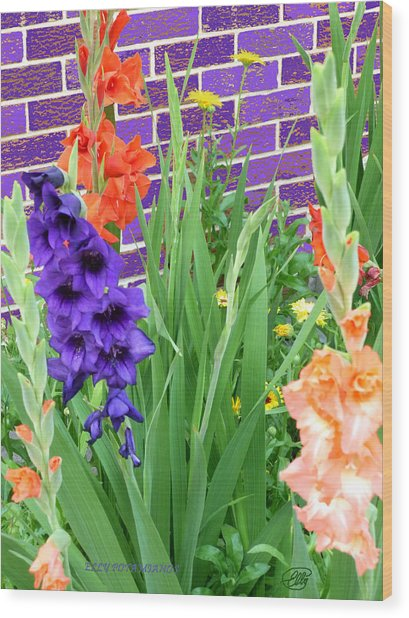 Colorful Gladiolas Wood Print