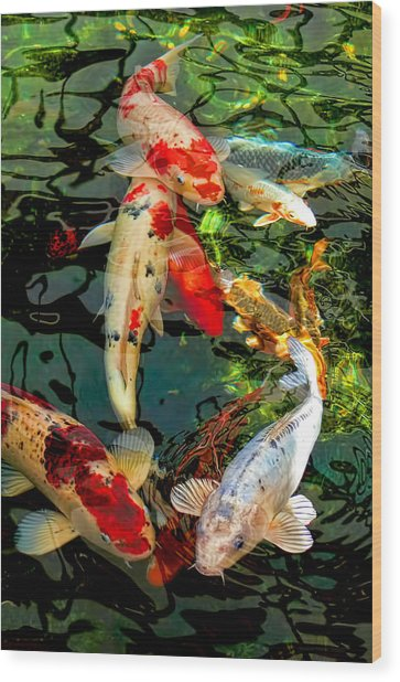 Colorful  Japanese Koi Fish Wood Print