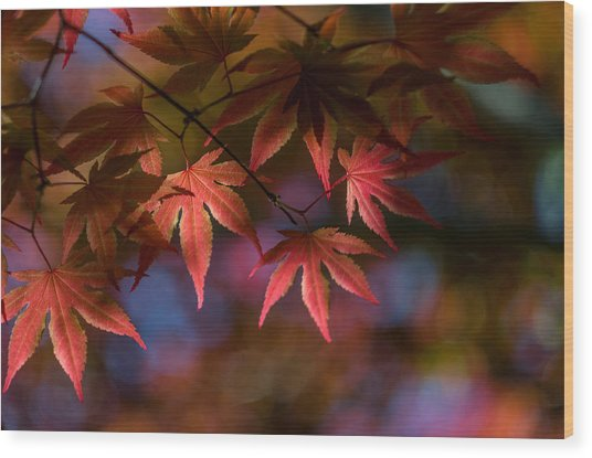 Colorful Japanese Maple Wood Print
