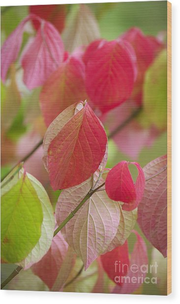 Colorful Leafs  Wood Print