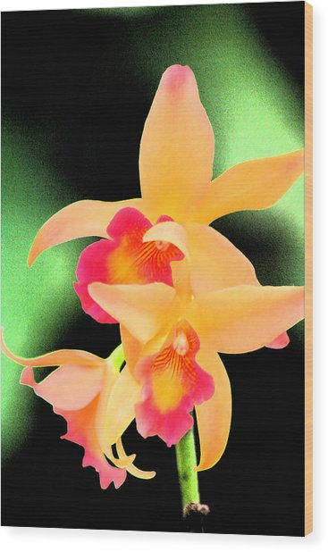 Colorful Orchid Wood Print by Nanette Hert