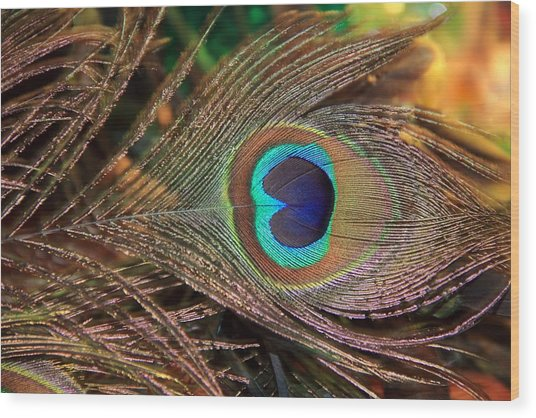 Colorful Peacock Feather Wood Print